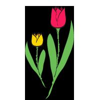 sezione tulipani